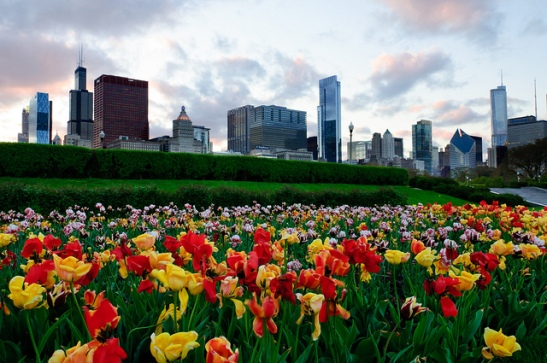 spring time chi
