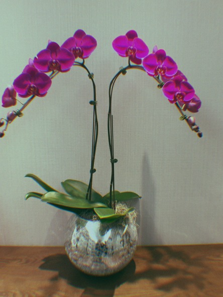 Some orchids in a hotel