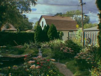 My backyard before everything began to die